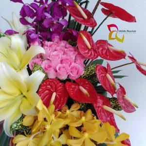 hồng phúc, hoa tươi, hoa đẹp, hoa ly, hoa hồng môn